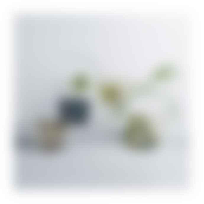 Iittala   Alvar Aalto Vase 160mm Clear