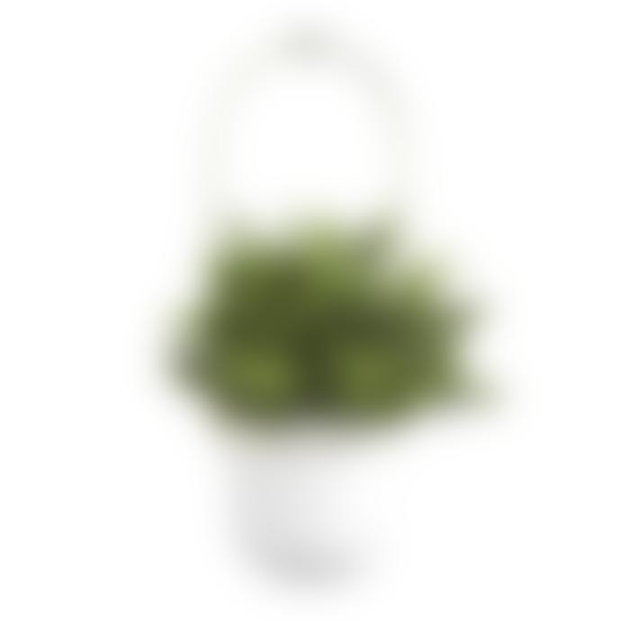 Umbra White Brass Triflora Hanging Planter