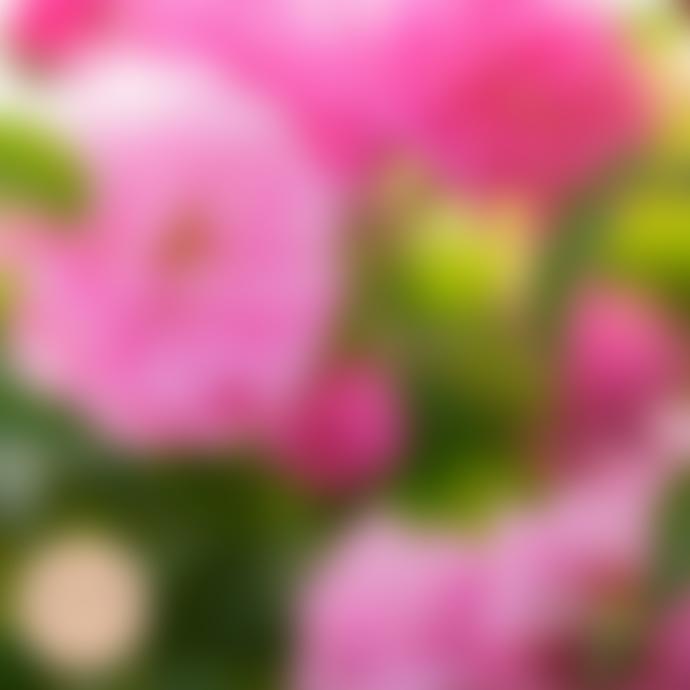 MERME Berlin Facial Antioxidant Mist Organic Rose Water