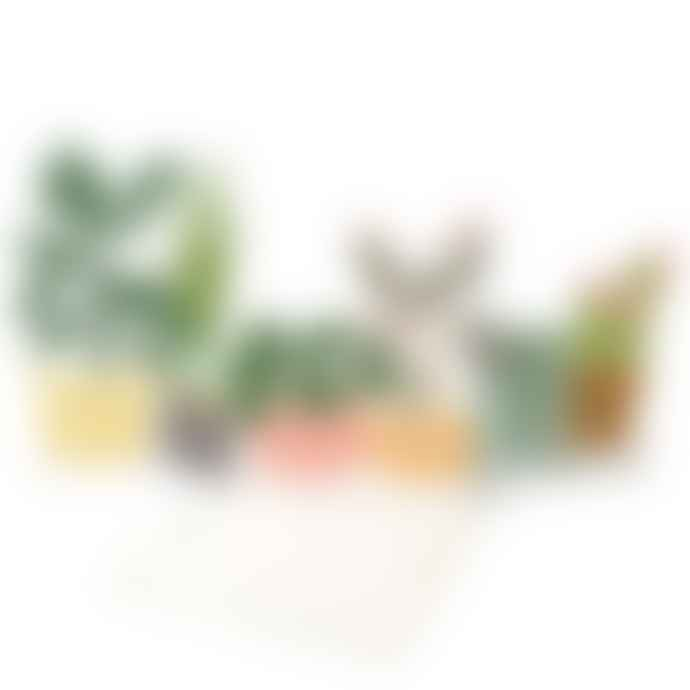 Meri Meri Potted Plant Concertina Card