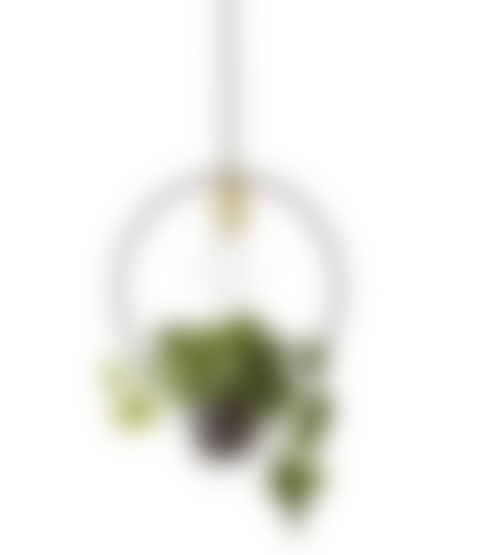 Bloomingville Gold and Glass Living Pendant Light
