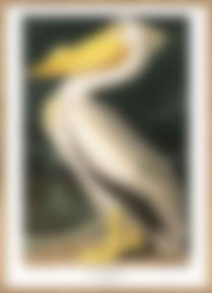 the Dybdahl Company 50 x 70cm Pelican Poster