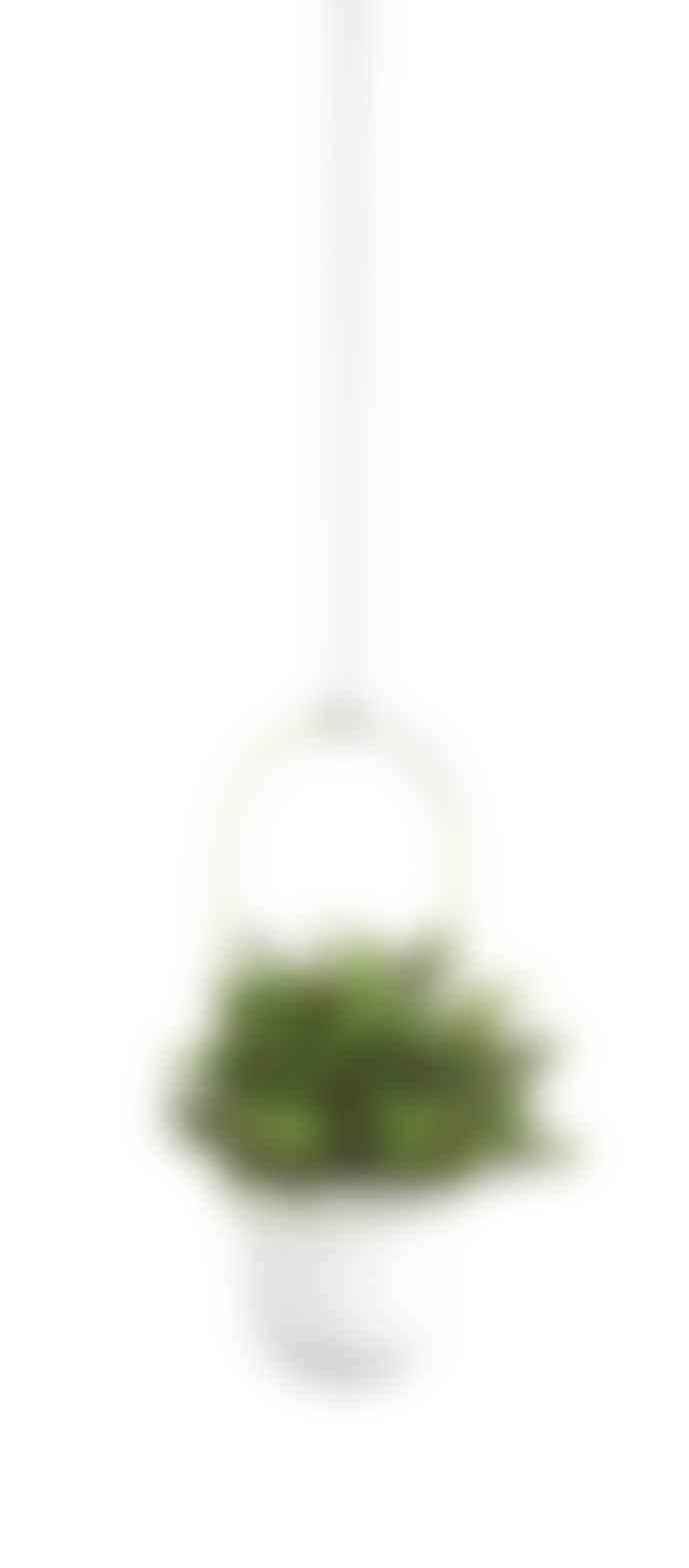 Umbra White and Brass Triflora Hanging Planter