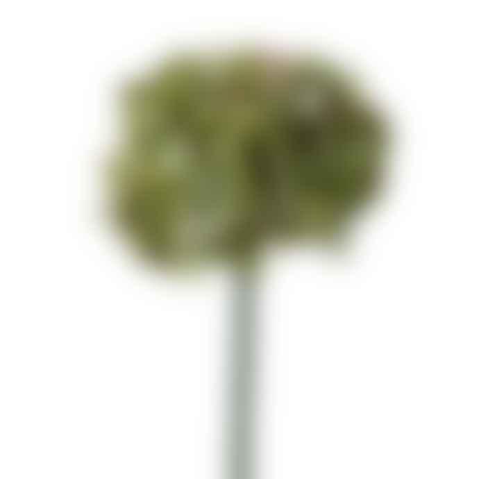 Abigail Ahern Hydrangea Moss Green