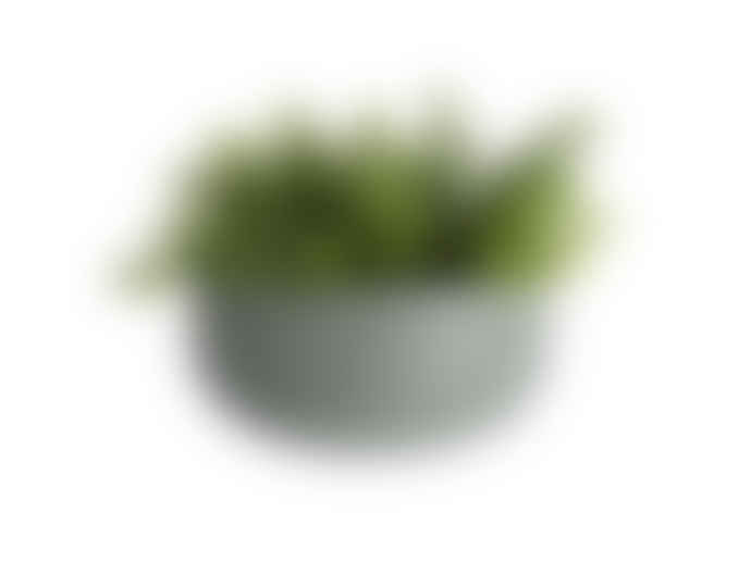 Present Time Wide Oval Ceramic Wall Planter Green