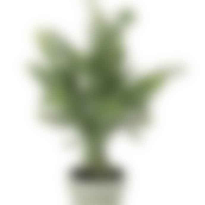Parlane Potted Faux Rosemary Tree