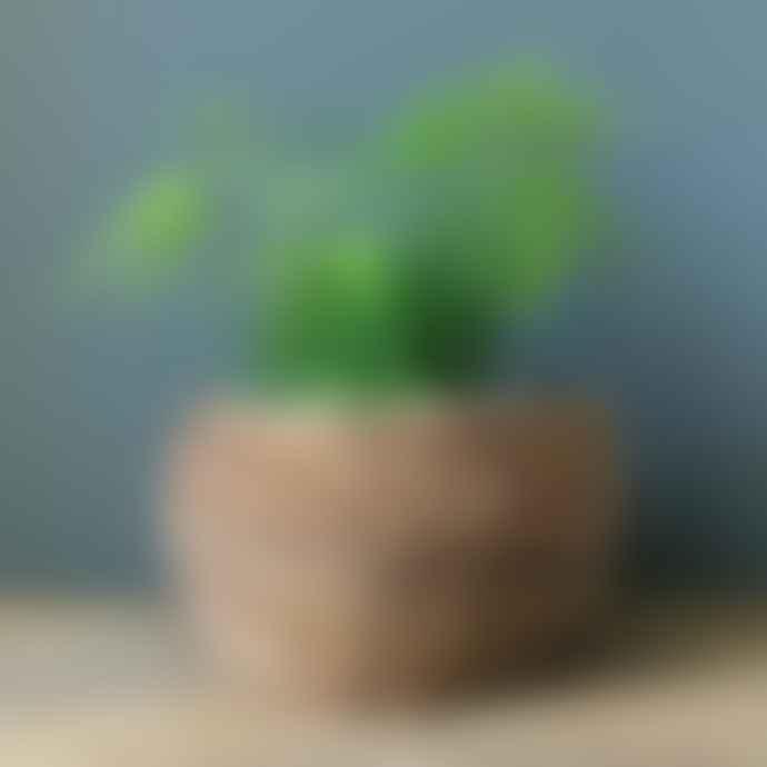 Wikholm Form Natural Woven Planter 26cm