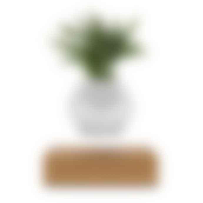 Flyte White Oak Lyfe Planter