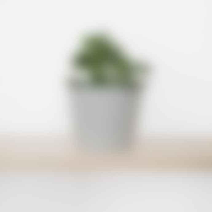 Botanique Workshop Set Of 3 Small Succulents