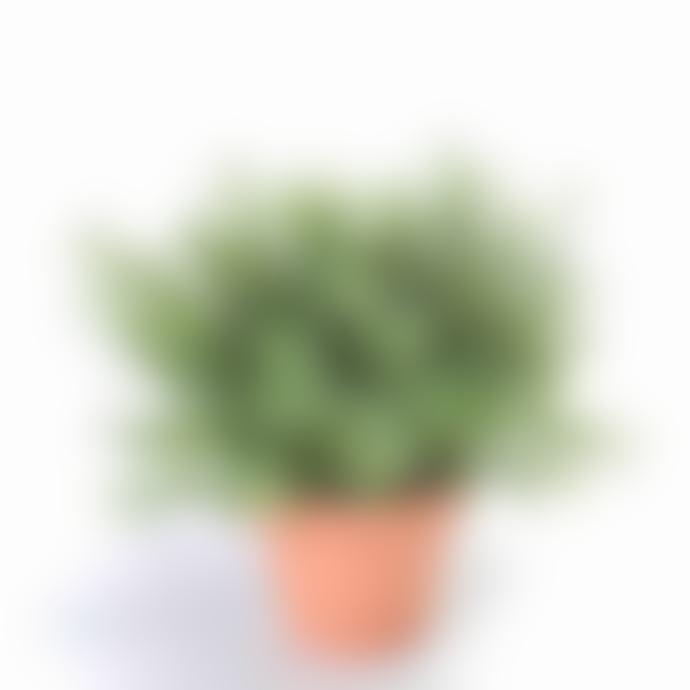 Dröm Collection Artificial plant 20x20cm with clay pot