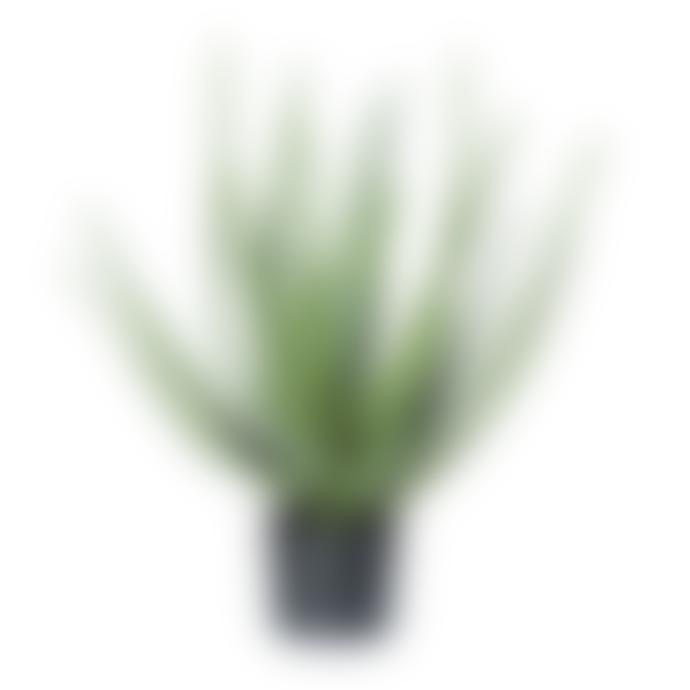 Dröm Collection Artificial Aloe Vera 55cm with plastic pot
