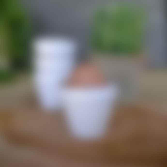 Eddingtons White Flower Pot Egg Cups - Pack of 4