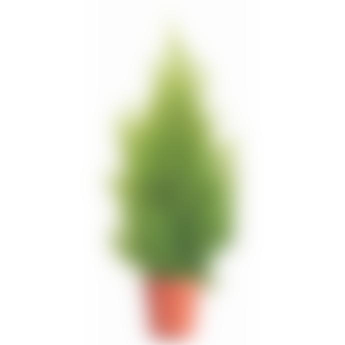 Dröm Collection Artificial juniper with plastic pot 55 cm