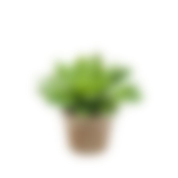 Dröm Collection Artificial cactus with clay pot 30xh27 cm