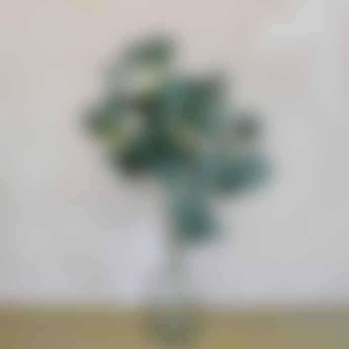 livs Eucalyptus Bunch - Large Leaves