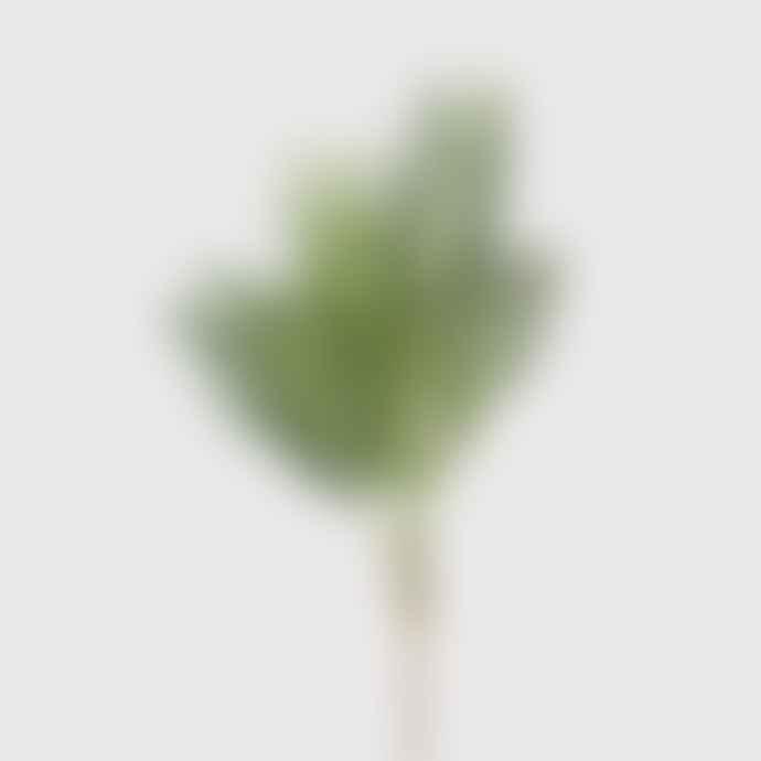 livs Green Palm Bush Stem