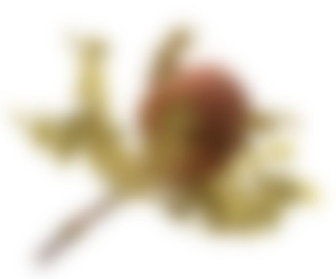second flor Banksia Hookerana preserved 2-5cm x 8-12cm x h.15-25 cm in pink nude