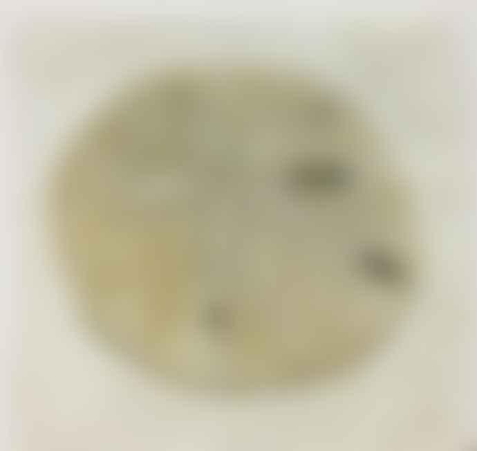 Jenny Blanc Exclusive Coaster - Sand Dollar Italian Marble