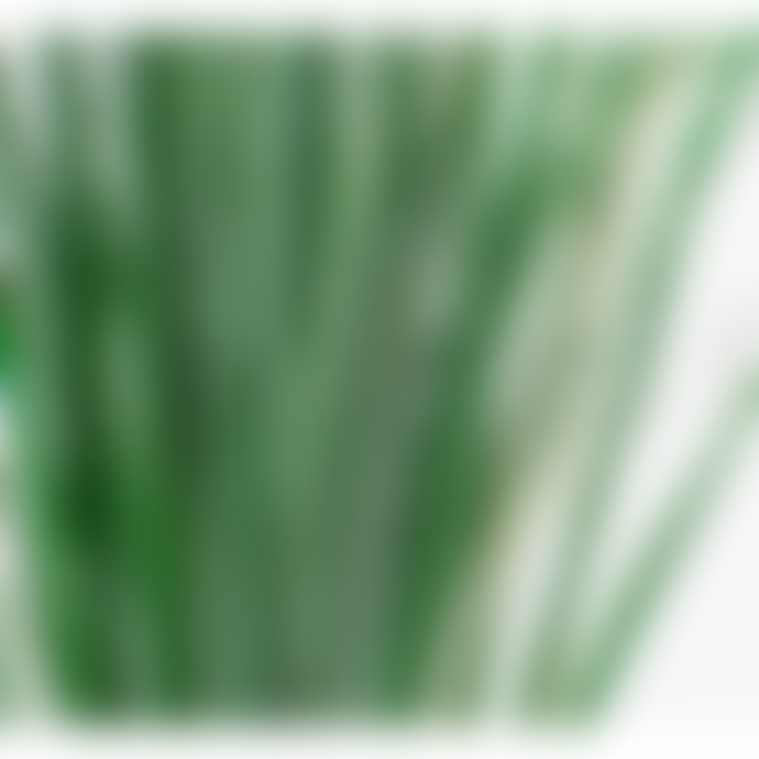 second flor Preserved Bear Grass leaves L40-60cm in green