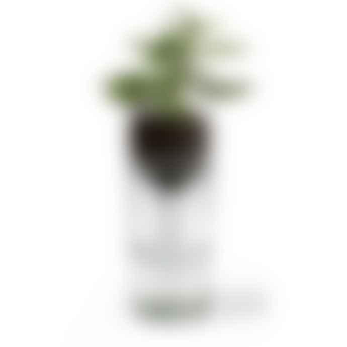 Side by Side Design Grow Bottle/Self Watering Bottle