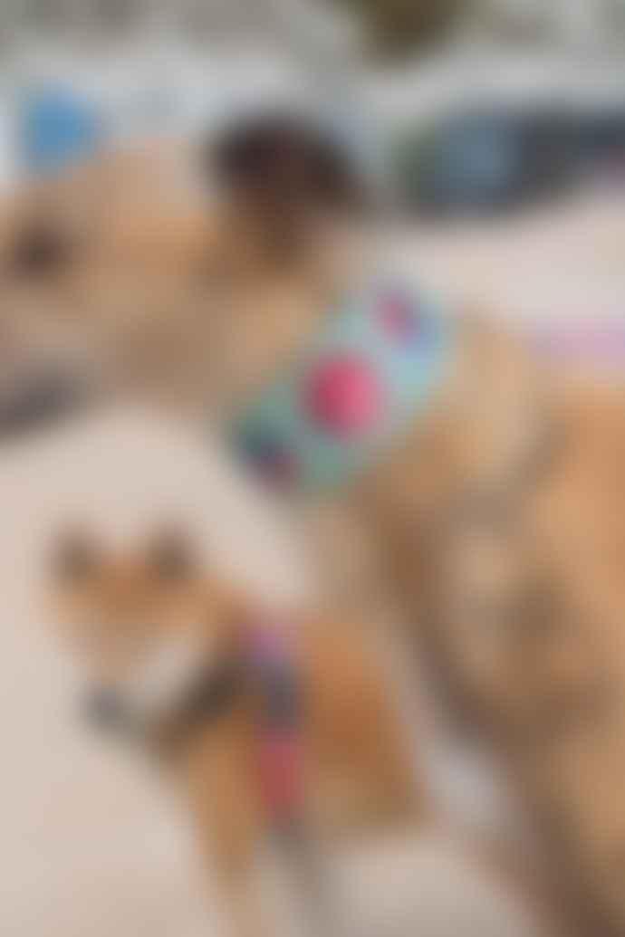 Hiro + Wolf Kaleidoscope Hound Collar