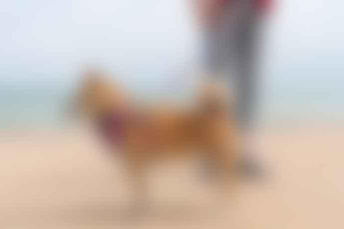 Hiro + Wolf Kaleidoscope Dog Bandana