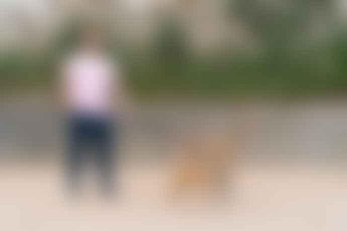 Hiro + Wolf Inca Holly Hands Free Coupler Dog Lead