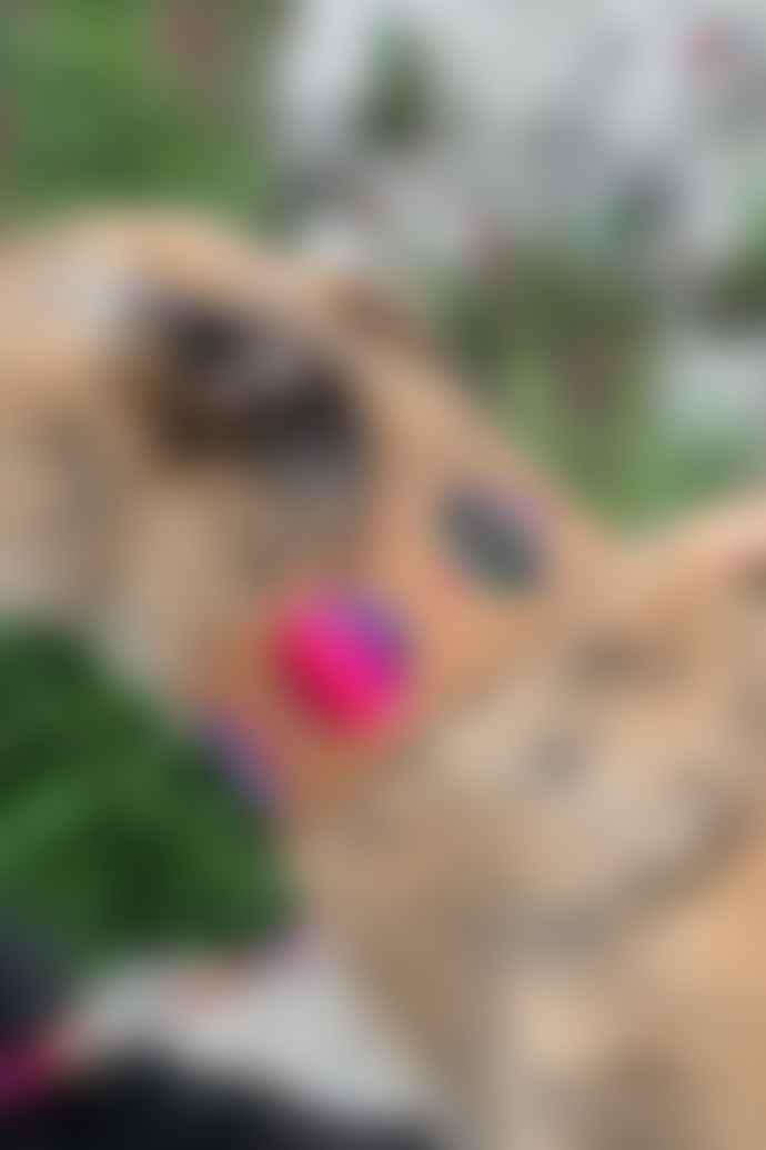 Hiro + Wolf Inca Pink Hound Collar
