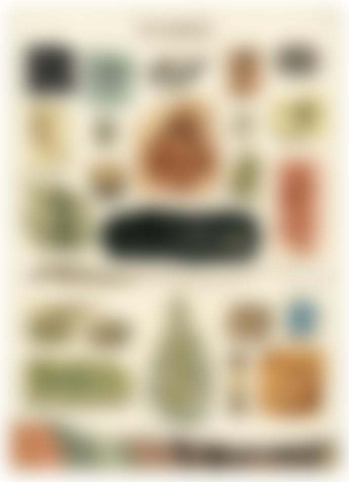 Cavallini & Co Fossils Poster