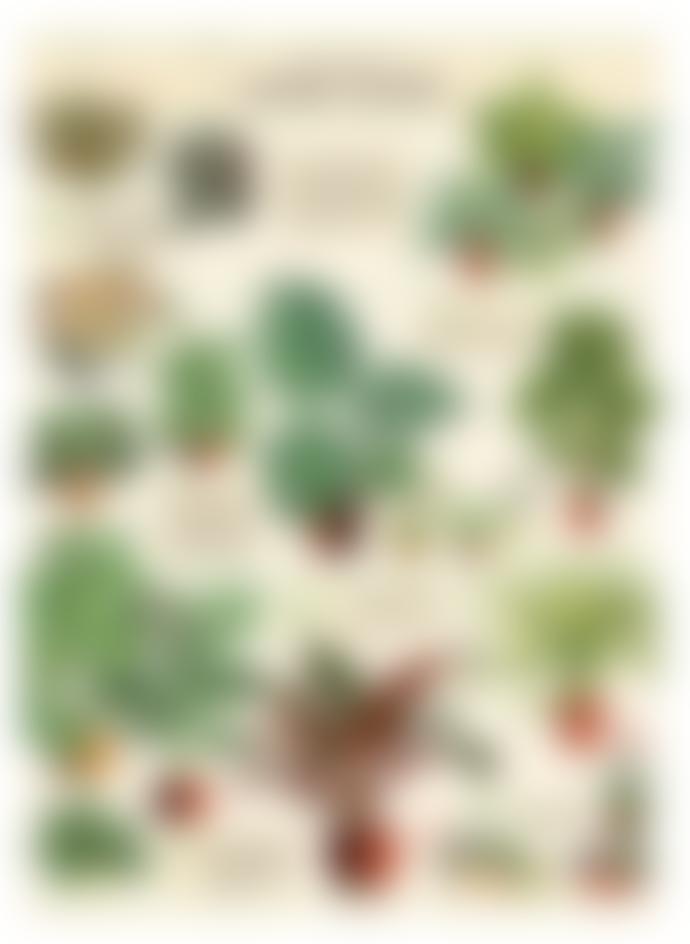 Cavallini & Co House Plants Poster