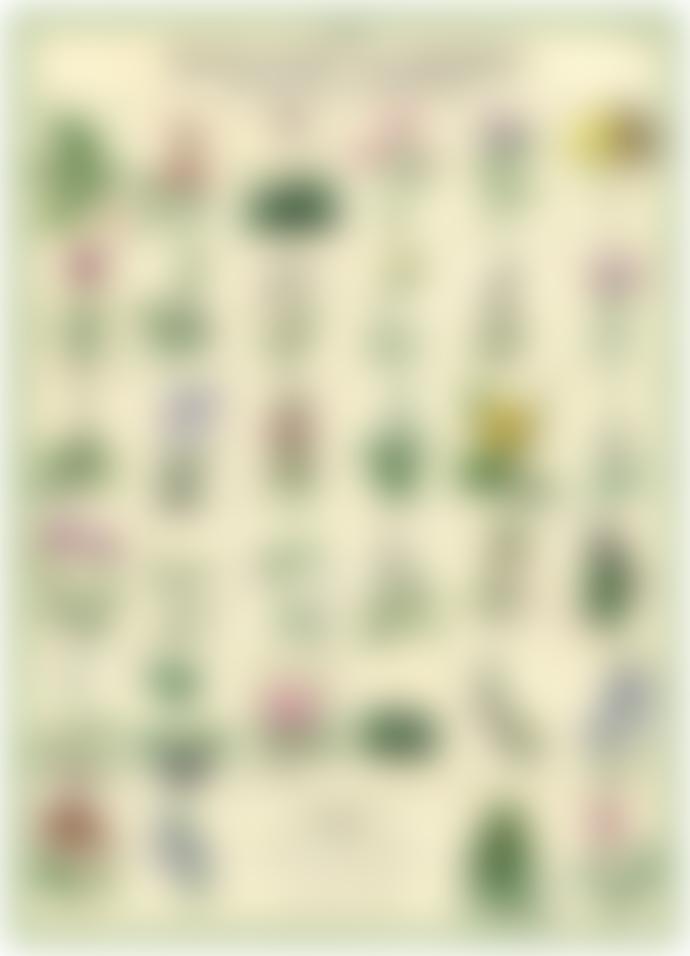 Cavallini & Co Botanic Garden Poster