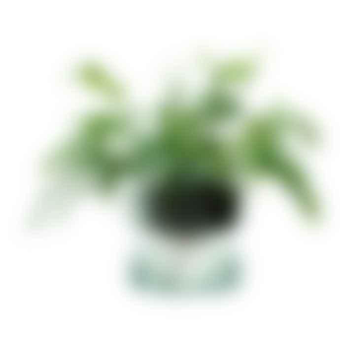 LSA International 22cm Canopy Self Watering Planter