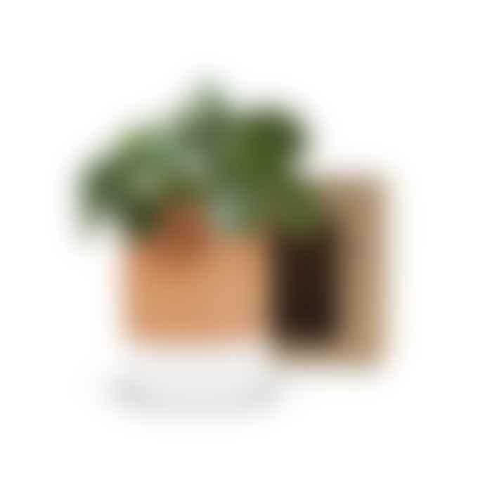 Ciel Mon Radis Jeannot Self Watering Plant Pot Medium