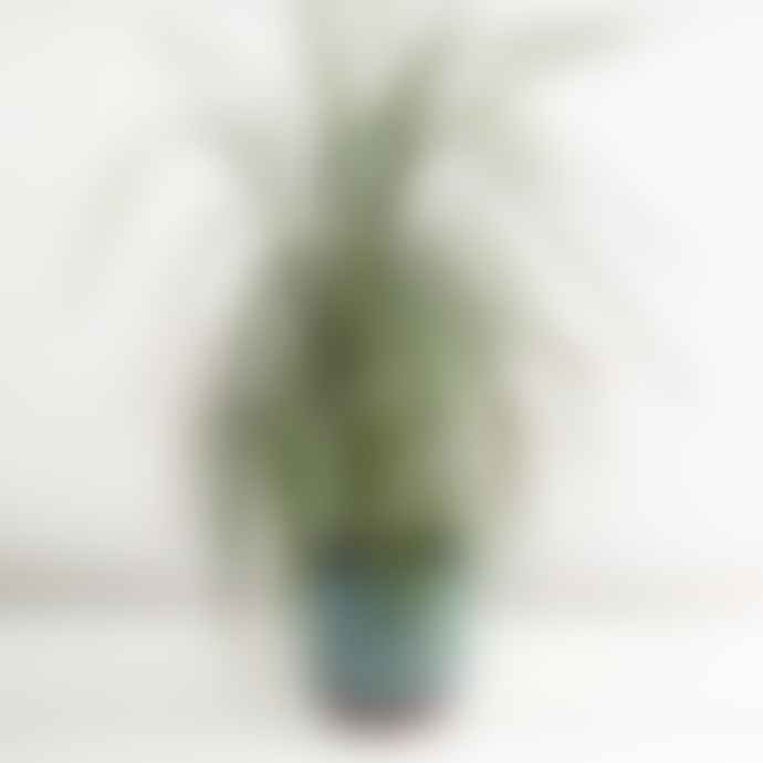 Burgon & Ball Malibu Blue Plant Pot