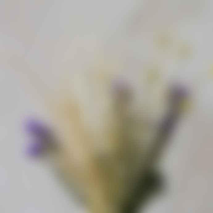 livs Dried Flowers Bouquet Myrtles Meadow