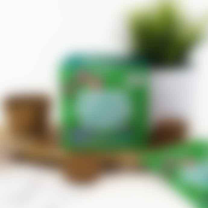 Gift Republic Dancing Dinosaur Plant Grow Kit