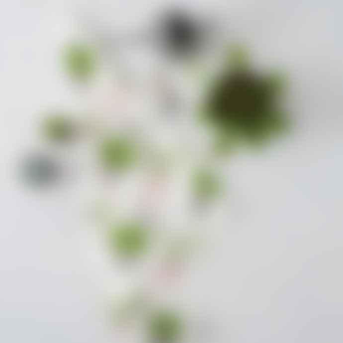Thornback & Peel Cactus & Bird Print Tea Towel