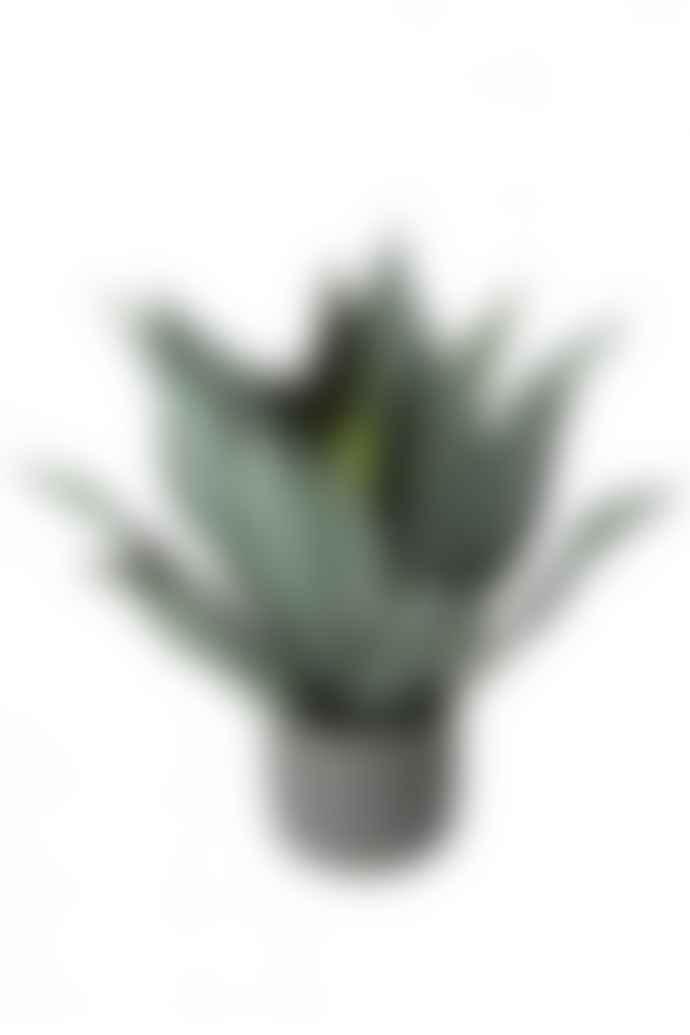 The Sue Parkinson Home Collection Aloe In Green Pot