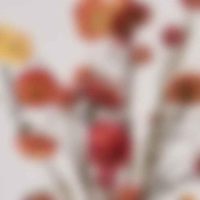 Botanique Workshop Straw Flowers Coral Dried Bunch