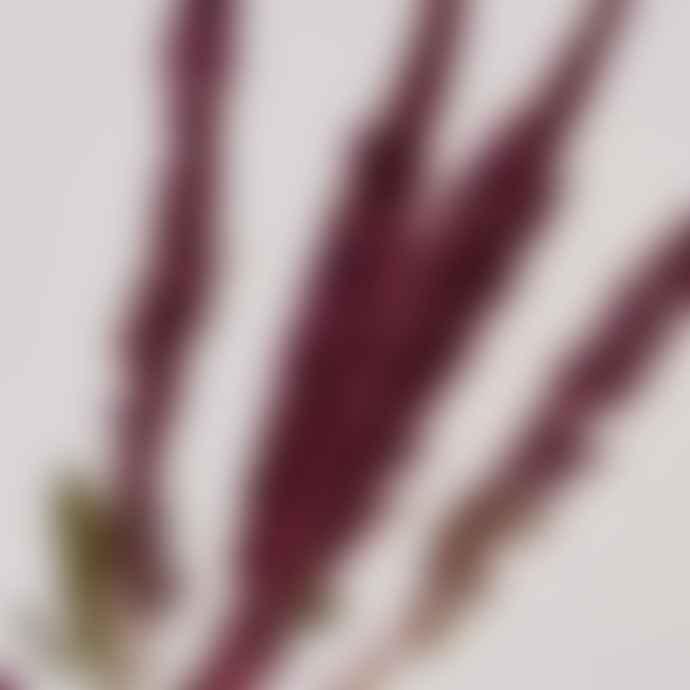 Botanique Workshop Amaranthus Dried Bunch