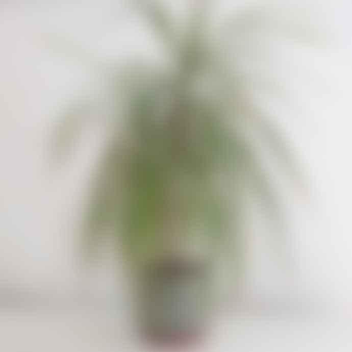 Burgon & Ball Malibu Green Plant Pot