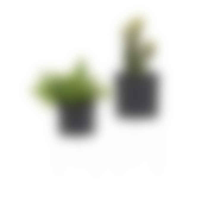 Present Time Set of 2 Black / White Stilt Indoor Planters