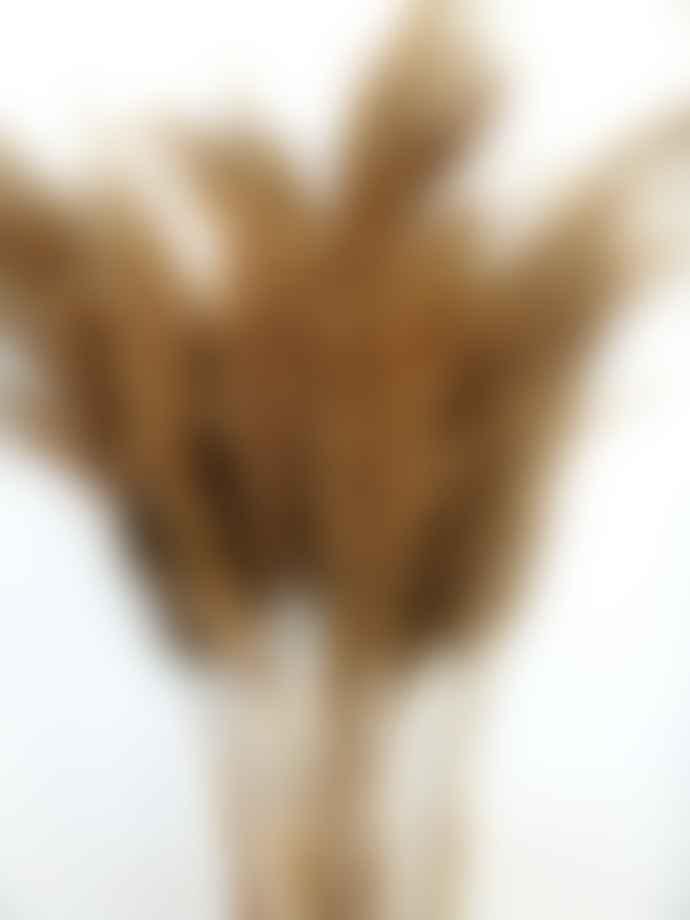 getrocknetes Pampasgras klein extra fluffig 5Stk natur