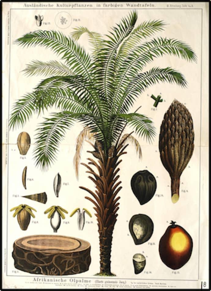 Cuemars Palm Tree Vintage Botanical Illustration