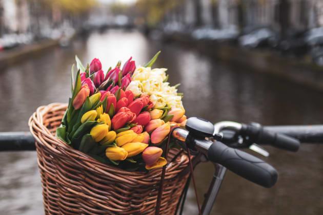 Visiter Amsterdam au Printemps
