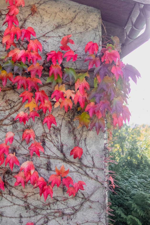 Ma bucket list d'automne 🍁