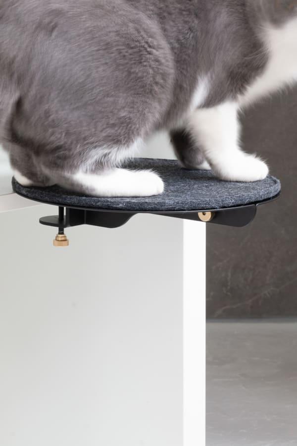 Catssup