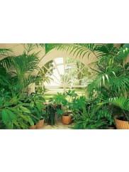 HOME AFFAIREWandtapete, »Wintergarden«, 366/254 cm, grün, grün