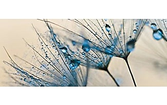 Eurographics bilder 1408 produkte jetzt ab 10 95 for Deco glass bilder kuche