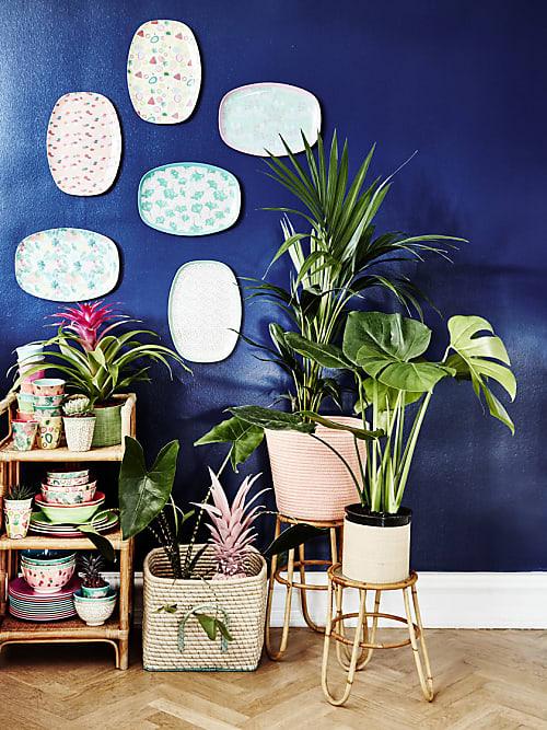 diese zimmerpflanzen passen perfekt zu deinem sternzeichen stylight. Black Bedroom Furniture Sets. Home Design Ideas